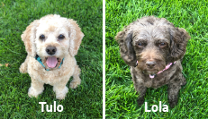 Tulo and Lola Tynan